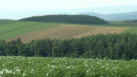 06富良野の農場 Footage