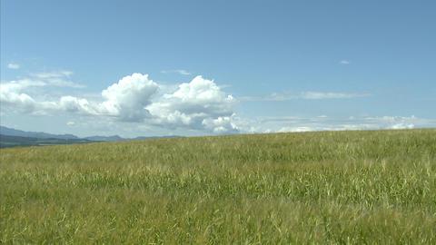 07 富良野の農場 麦畑 Footage