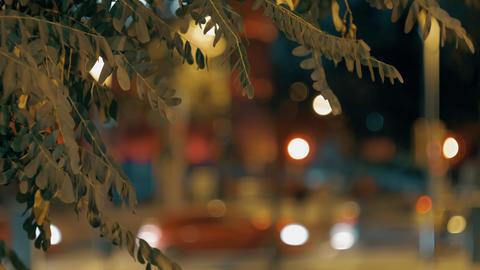 An acacia and a night city Archivo