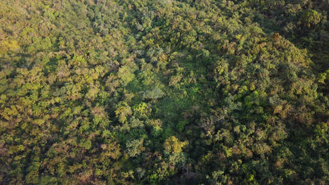 Aerial view of green forest on the mountain in summer Footage