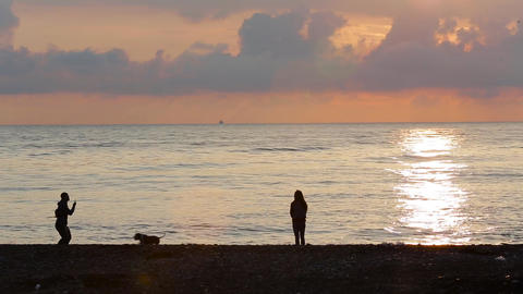[alt video] A guy with a girl and a dog walking on the beach 005