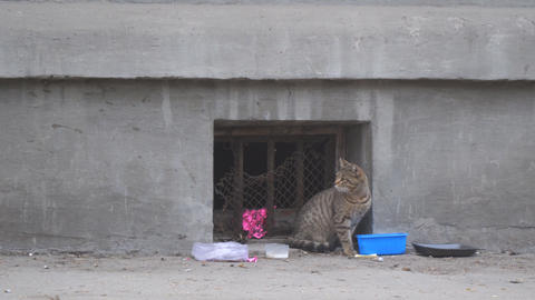 Homeless stray cat sits on a wall Footage