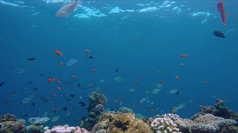 Small colorful fish above a colorful reef Live Action
