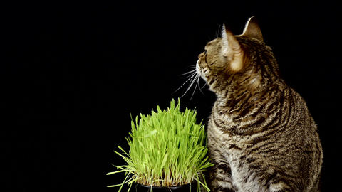 Cat Next To Grass Over Black Background GIF