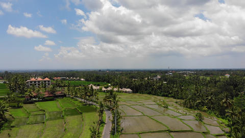 Rice Terraces In Indonesia Bali Live Action