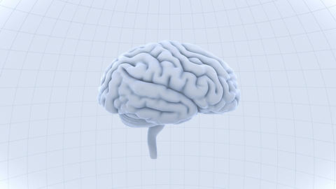 Brain 19 1 A1dW 4k Animation