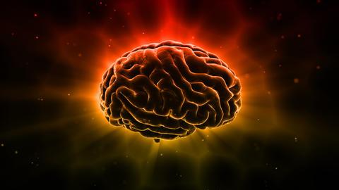 Brain 19 1 B1bD 4k Animation