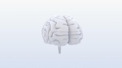 Brain 19 1 B1bS 4k, Stock Animation