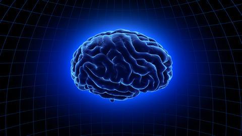 Brain 19 1 B1dB 4k Animation