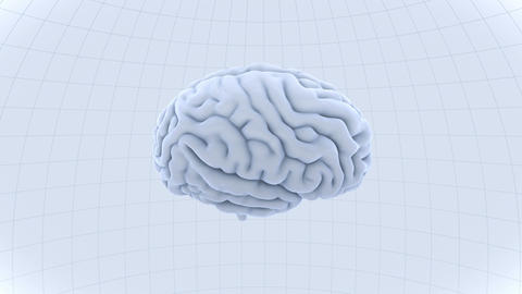 Brain 19 1 B1dW 4k, Stock Animation