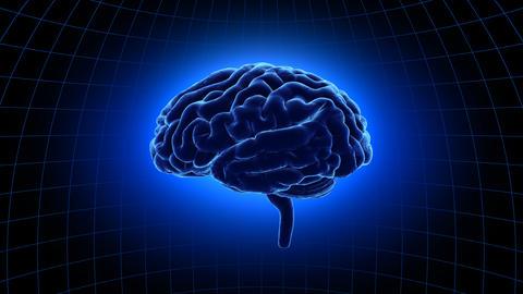 Brain 19 1 C1dB 4k Animation