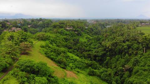 Drone Flight Over Bali Jungle Live Action