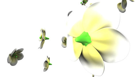 White flowers on white background CG動画