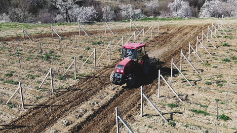 Red tractor cultivate soil in the vineyard Morning on a sunny day Archivo
