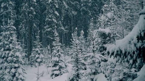 Winter Landscapes 1