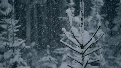 Winter Landscapes 2