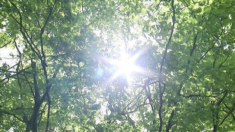 木漏れ日5p Footage