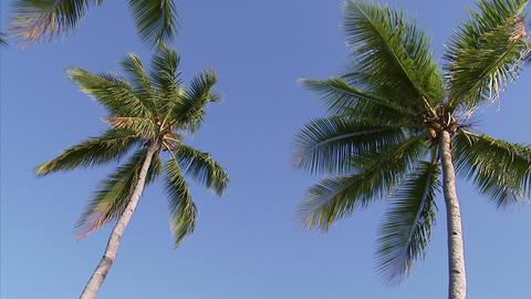 008 Coconut Footage