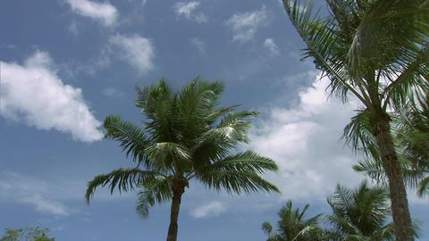 010 Coconut Footage