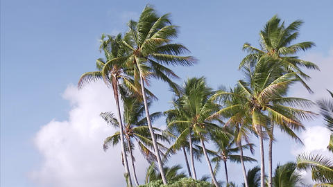 031 Coconut Footage