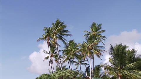032 Coconut Footage
