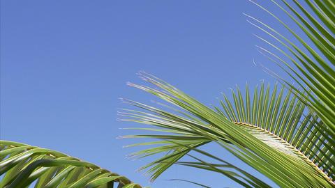 049 Coconut Footage