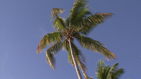 104 Coconut TEM 06 Footage