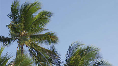 106 Coconut TEM 08 Footage