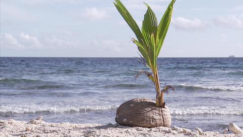 115 Coconut TEM 17 Footage