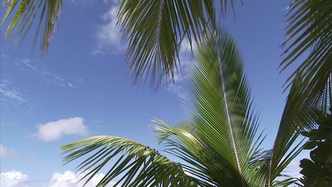 117 Coconut TEM 19 Footage
