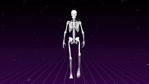 Human skeleton walking in the purple background Animation