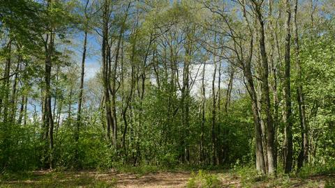 Springtime forest landscape Footage