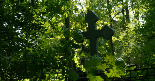 Grave cross among the lush greenery Live Action
