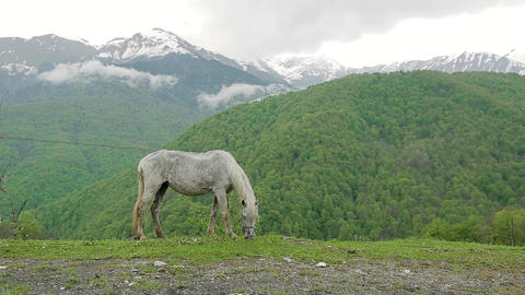 Grey horse grazing in the Caucasus mountains 001 Stock Video Footage