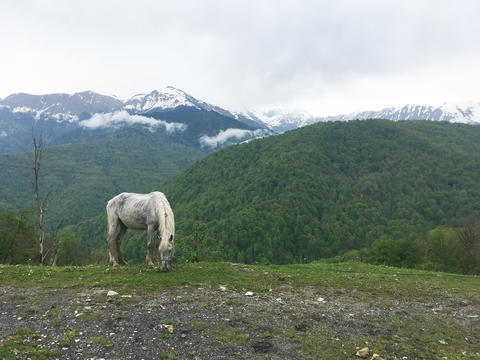 Grey horse grazing in the Caucasus mountains 002 Photo