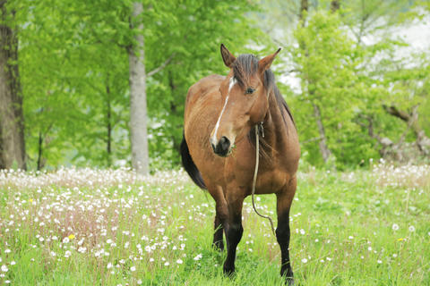 Horse grazing in the field 007 Photo