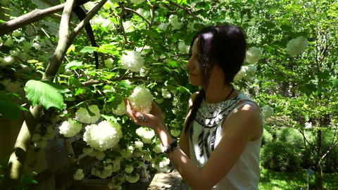 Young woman sniffs flowers of hydrangea in the park Footage