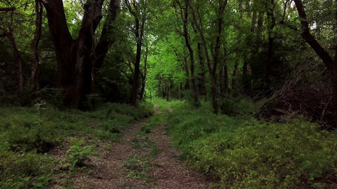 Dark mysterious forest - moving between trees in fantasy woodland Live Action