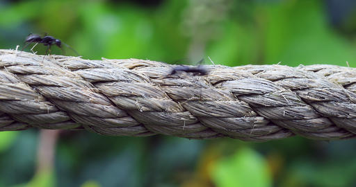 Ants Running Over A Rope Archivo