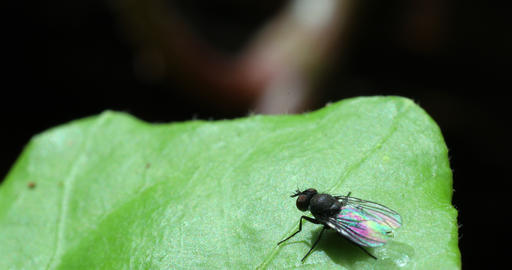 Close Up Of The Little Fly On The Green Leaf Footage