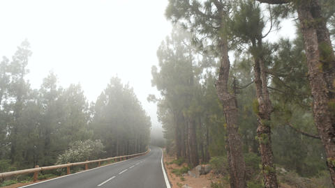 POV driving through a pine forest in mountains. Point of view driving, view from Footage