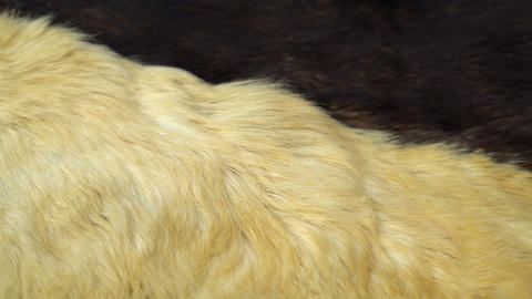 Seamless loop fluffy hair skin of dog Archivo