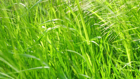 Green grass and spikes in sunlight Live Action