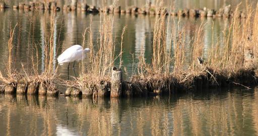 Heron in the pond copyspace Archivo