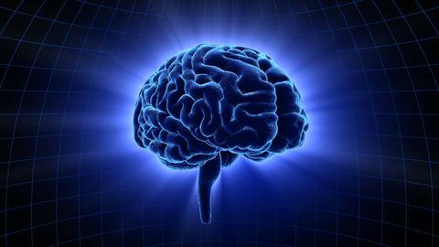 Brain 19 1 D1dB 4k Animation