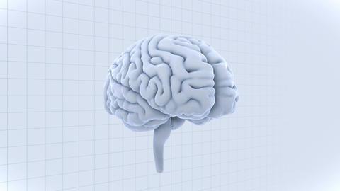 Brain 19 1 D1gW 4k Animation