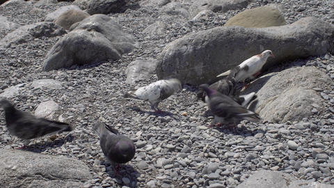 Pigeons Eating On The Beach Stock Video Footage
