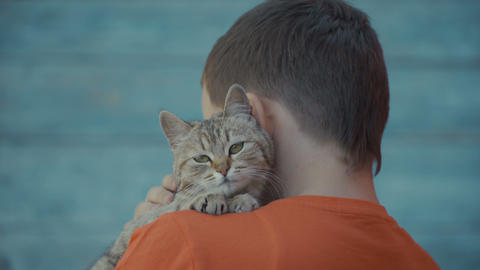 young guy stroking a cat Stock Video Footage