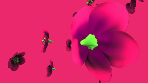 Purple flowers on purple background Animation