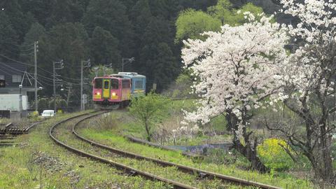 樽見鐵道と桜01 Live Action